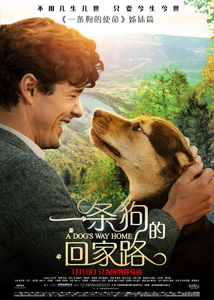 一条狗的回家路(A Dog s Way Home)