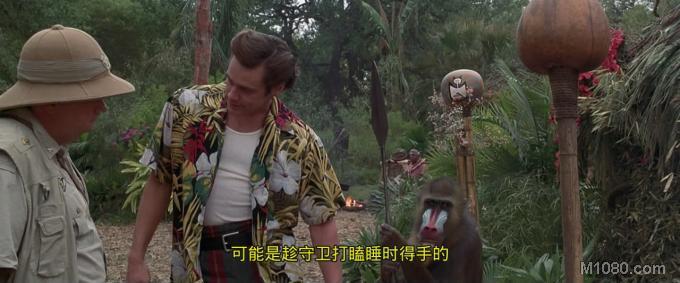 浣熊行动的失败,使得艾斯文图拉(金凯瑞 Jim Carrey 饰)决定前往喜马拉雅山深处进行修行,锻炼自己避免再出现浣熊行动这样的事情出现。时间过得很快,一天艾斯突然收到邀请。非洲瓦查蒂族的神物一只白色大蝙蝠不知所踪。他们希望艾斯重出江湖,帮他们找回这只白蝙蝠。一踏上非洲大陆,艾斯就立马展开了侦查工作。首先,艾斯将怀疑对象锁定在了野生动物园园长身上,可是却苦苦无法找到证据,只好作罢。接着他又怀疑是部落巫师偷走的,但是也是毫无头绪。在笑料百出的调查过程中,艾斯发现白蝙蝠原来在两个盗猎者手上,而其幕