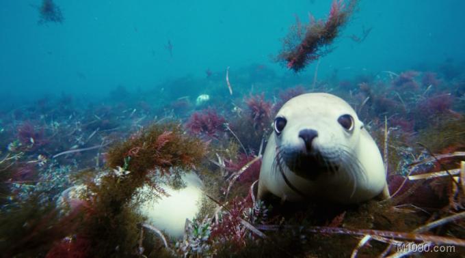 海底世界3d
