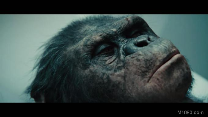 3D猿族崛起(Rise of the Planet of the Apes)17