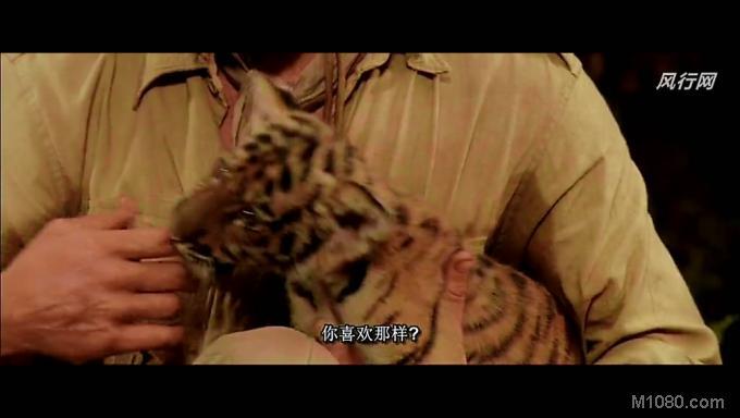 老虎古玛和桑哈出生在印度的原始森林里,本来正是无忧无虑的童年